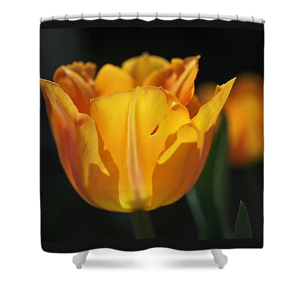 Glowing Tulips Shower Curtain by Rona Black