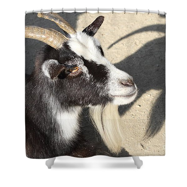 Goat 7d27402 Shower Curtain by Wingsdomain Art and Photography