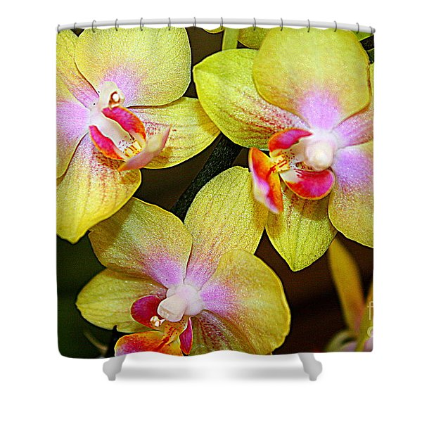 Golden Orchids Shower Curtain by Photographic Art and Design by Dora Sofia Caputo