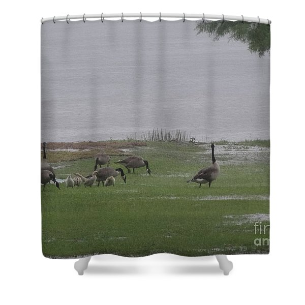 Goose Family Walk Shower Curtain by Joseph Baril