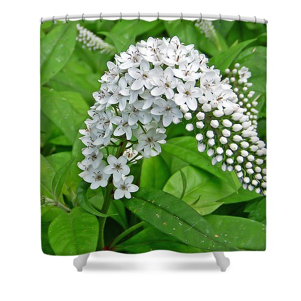 Gooseneck Flower Shower Curtain by Aimee L Maher Photography and Art