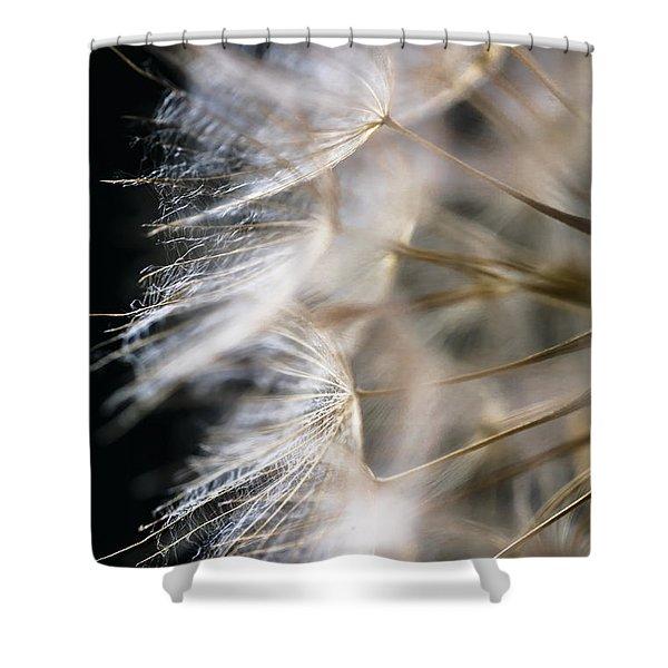 Gossamer Shower Curtain by Jan Bickerton