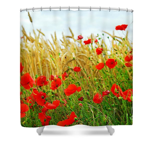 Grain and poppy field Shower Curtain by Elena Elisseeva