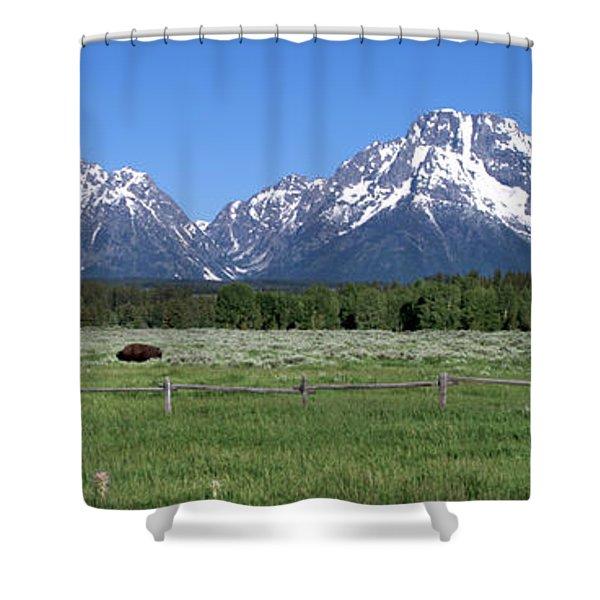 Grand Teton Buffalo Shower Curtain by Brian Harig