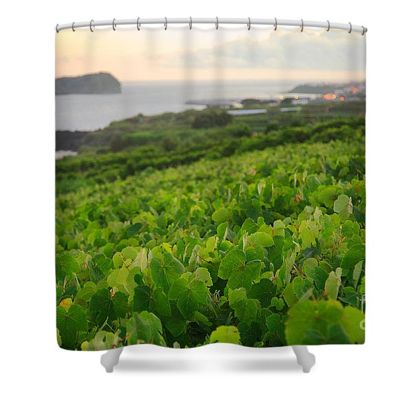 Grapevines and islet Shower Curtain by Gaspar Avila