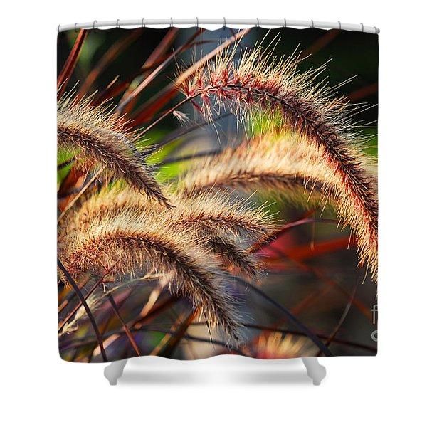 Grass ears Shower Curtain by Elena Elisseeva