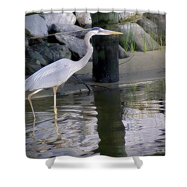 Great Blue Heron - Mealtime Shower Curtain by Brian Wallace