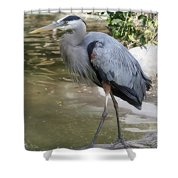 Great Blue Heron Shower Curtain by Shoal Hollingsworth