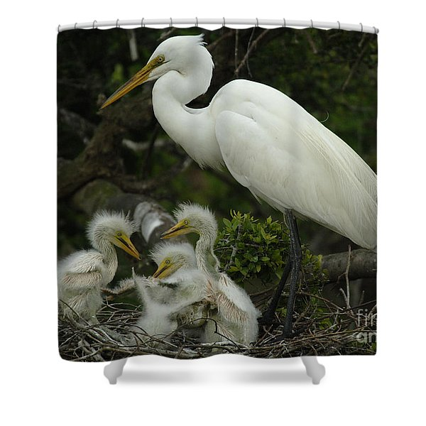 Great Egret With Young Shower Curtain by Bob Christopher