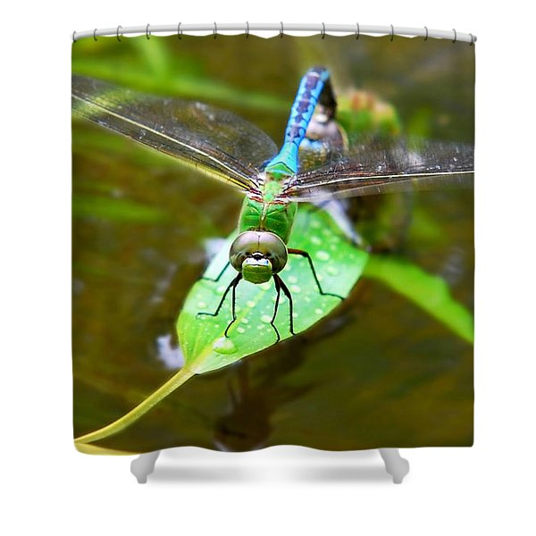 Green Darner Dragonfly Shower Curtain by Christina Rollo