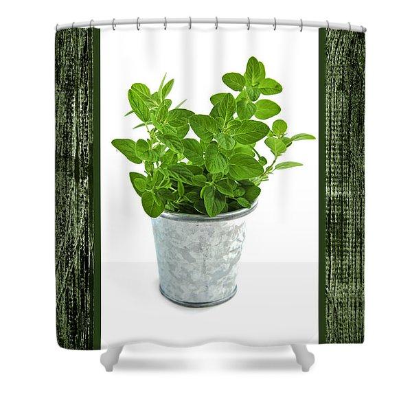 Green oregano herb in small pot Shower Curtain by Elena Elisseeva