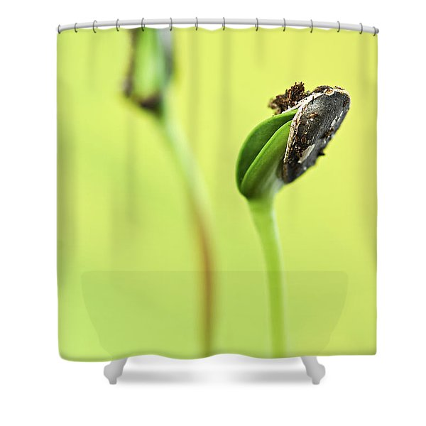 Green sprouts Shower Curtain by Elena Elisseeva