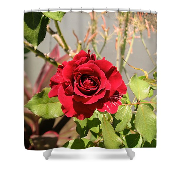 Growing Rose Shower Curtain by Zina Stromberg