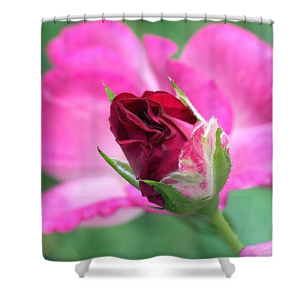 Growing Up Shower Curtain by Rona Black
