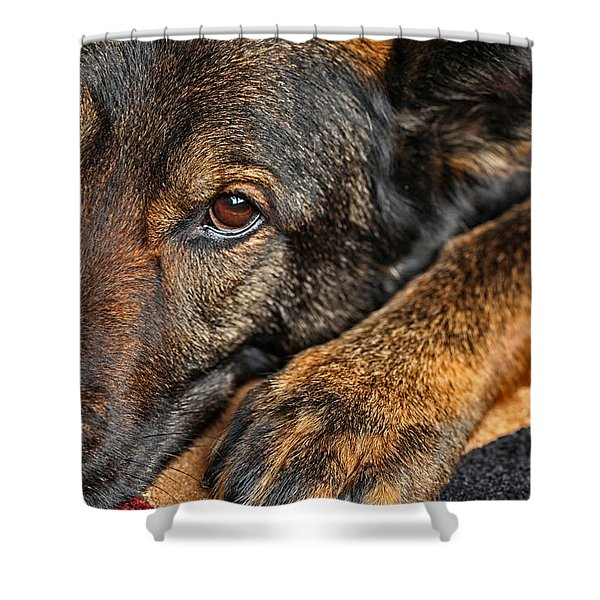 Guard Dog At Rest Shower Curtain by Karol  Livote
