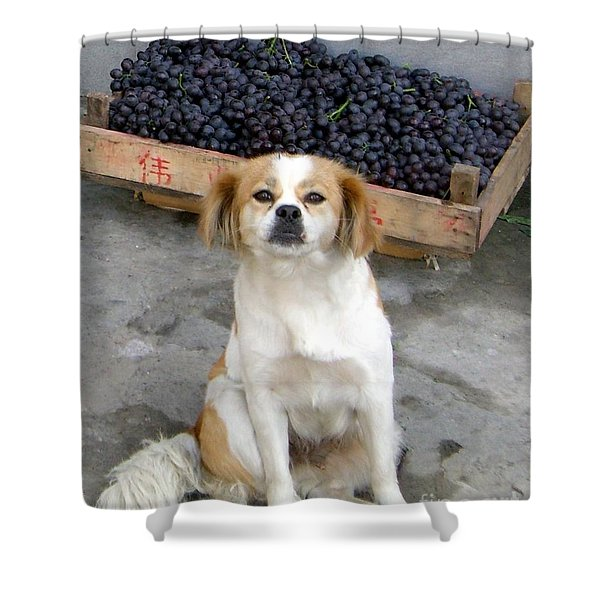Guardian Of The Grapes Shower Curtain by Barbie Corbett-Newmin