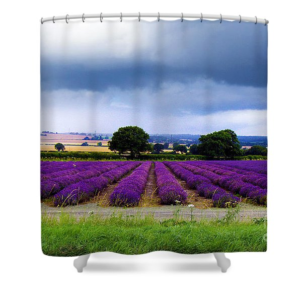 Hampshire Lavender Field Shower Curtain by Terri  Waters