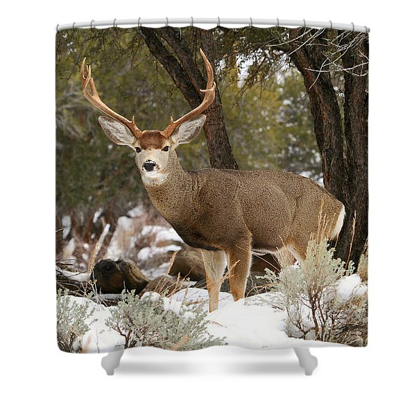 Handsome Buck Shower Curtain by Donna Kennedy