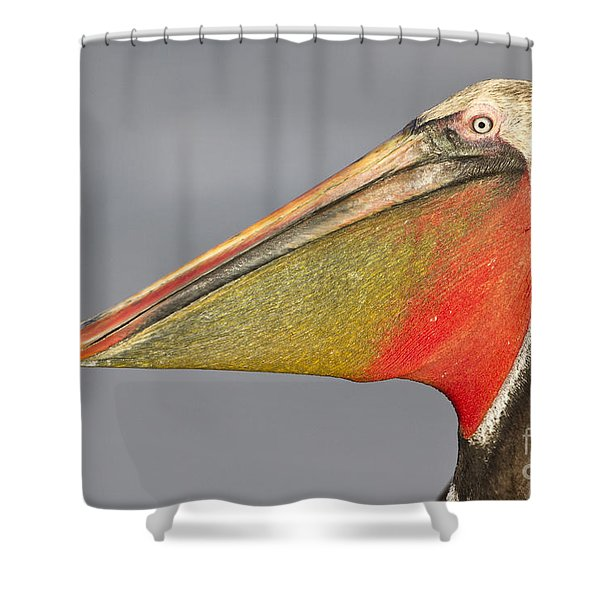 Handsome In Red Shower Curtain by Bryan Keil