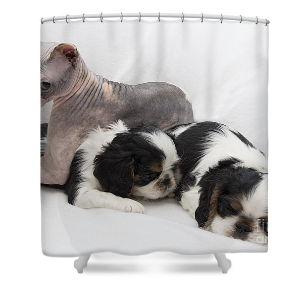 Hanging With The Dogs Shower Curtain by Jeannette Hunt