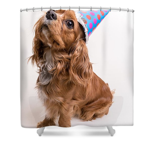 Happy Birthday Dog Shower Curtain by Edward Fielding