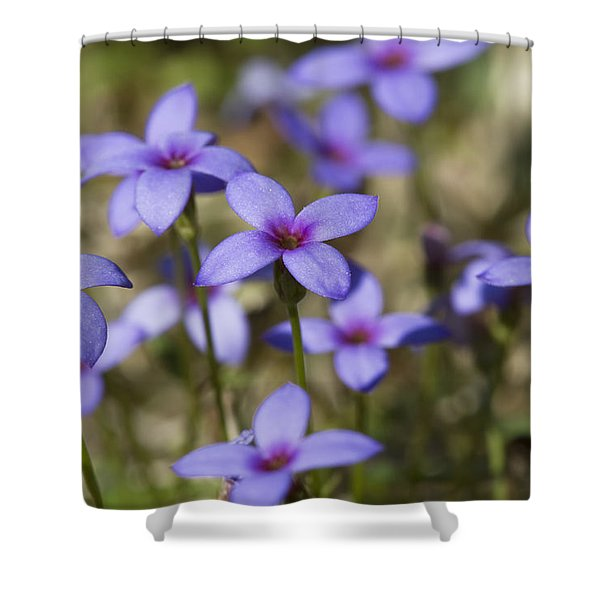 Happy Tiny Bluet Wildflowers Shower Curtain by Kathy Clark