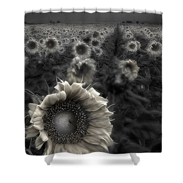 Haunting Sunflower fields 1 Shower Curtain by Dave Dilli