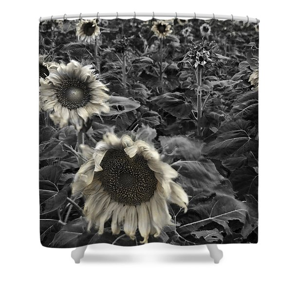 Haunting Sunflower Fields 2 Shower Curtain by Dave Dilli
