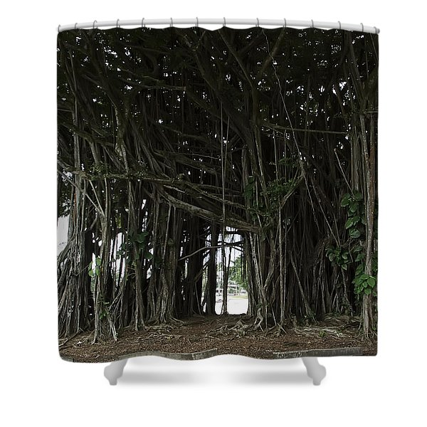 Hawaiian Banyan Tree - Hilo City Shower Curtain by Daniel Hagerman