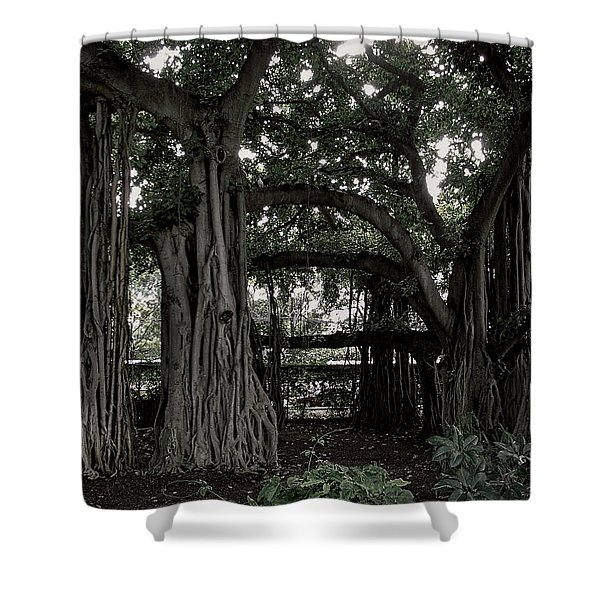 HAWAIIAN BANYAN TREES Shower Curtain by Daniel Hagerman