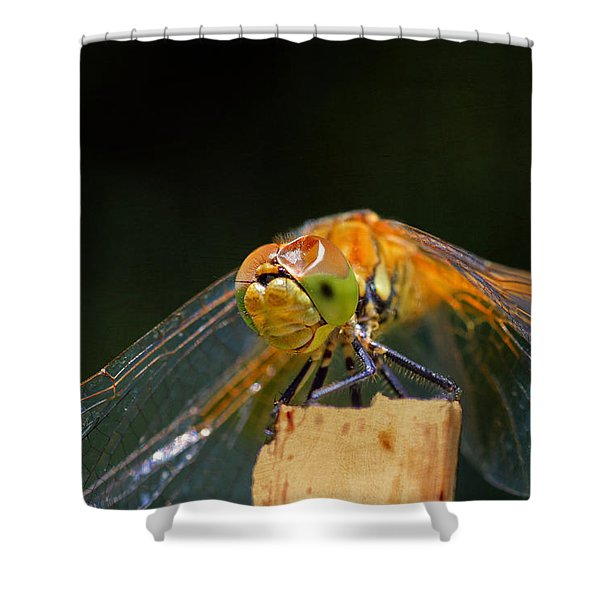 Head On Collision? Shower Curtain by Donna Kennedy