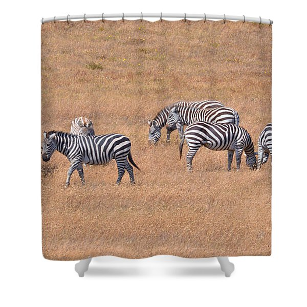 Hearst Castle Zebras Shower Curtain by Lynn Bauer