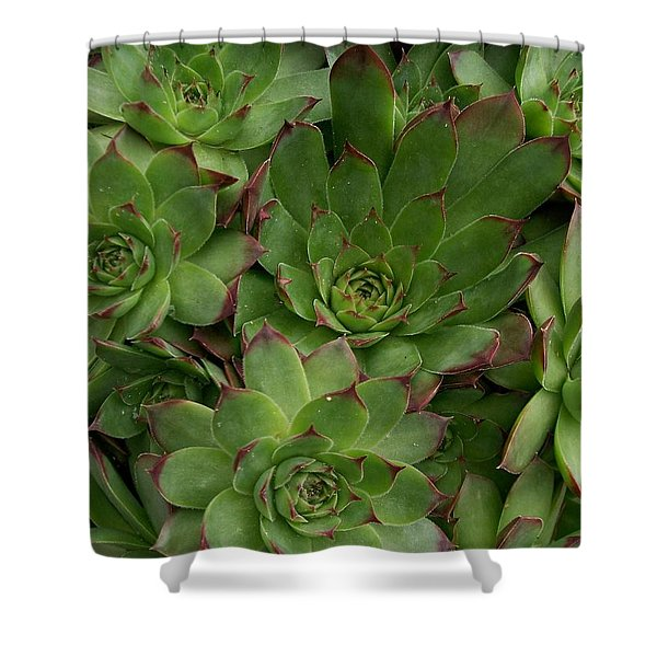 Hen and Chicks Shower Curtain by Sharon Duguay
