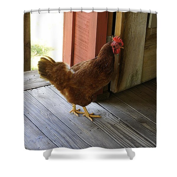 Henscratch Shower Curtain by Laurie Perry