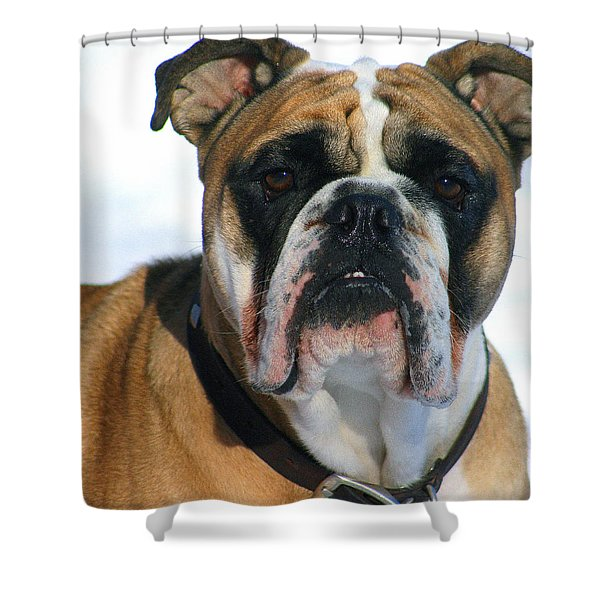 Hey Good Looking Shower Curtain by Kay Novy