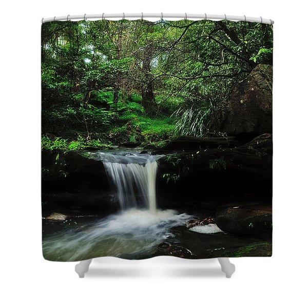 Hidden Rainforest Shower Curtain by Kaye Menner