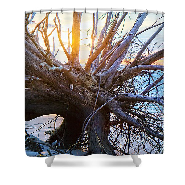 Historic Roots Shower Curtain by Betsy C  Knapp