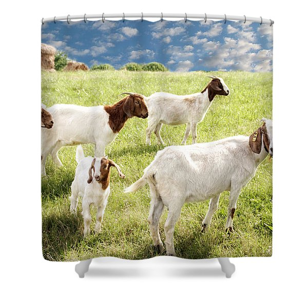 Homeward Bound Shower Curtain by Amy Tyler