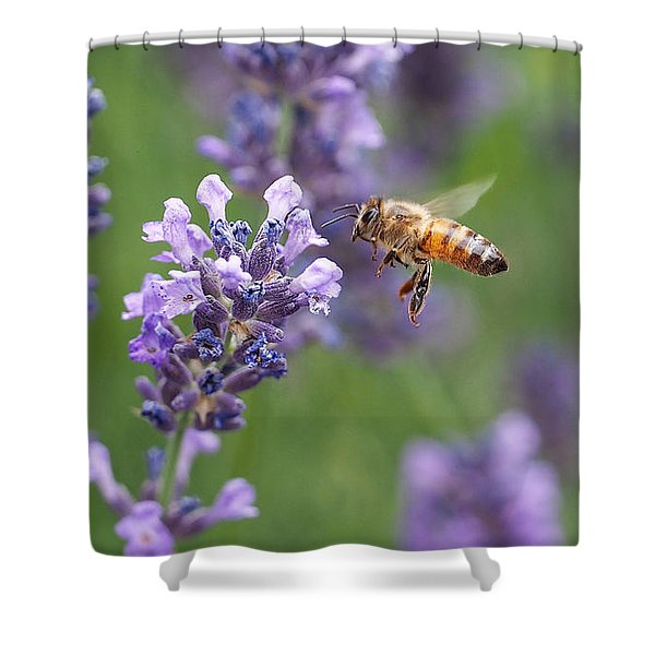 Honey Bee And Lavender Shower Curtain by Rona Black
