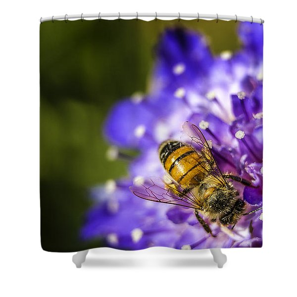 Honey Bee Shower Curtain by Caitlyn  Grasso