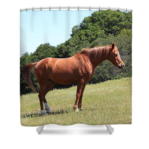 Horse Hill Mill Valley California 5d22683 Shower Curtain by Wingsdomain Art and Photography