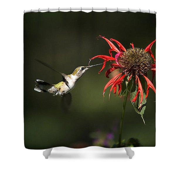 Hummingbird Garden Angel Shower Curtain by Christina Rollo