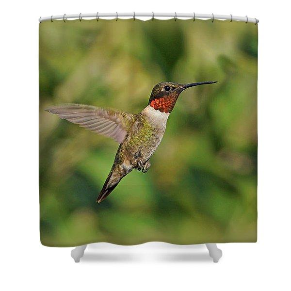 Hummingbird in Flight Shower Curtain by Sandy Keeton