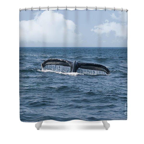 Humpback Whale Fin Shower Curtain by Juli Scalzi