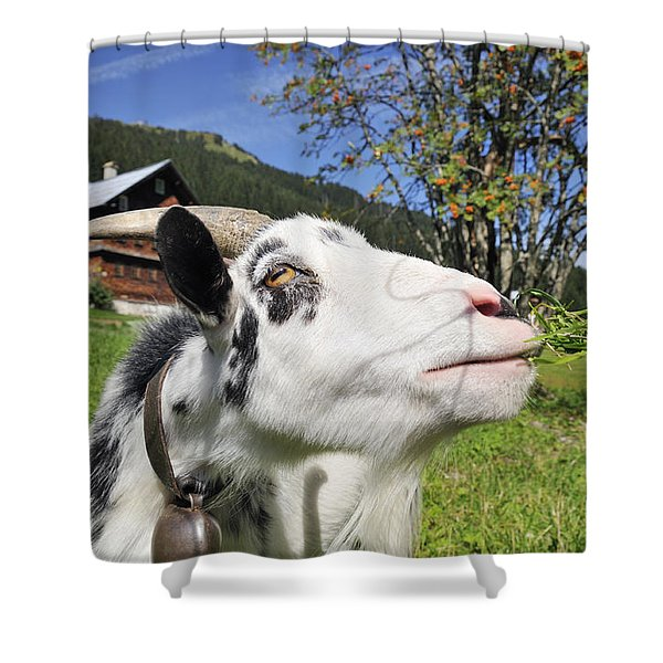 Hungry goat Shower Curtain by Matthias Hauser