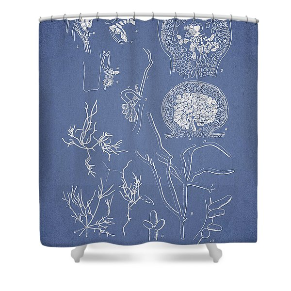 Hyalosiphonia caespitosa Okamura Valonia Confervoides Shower Curtain by Aged Pixel