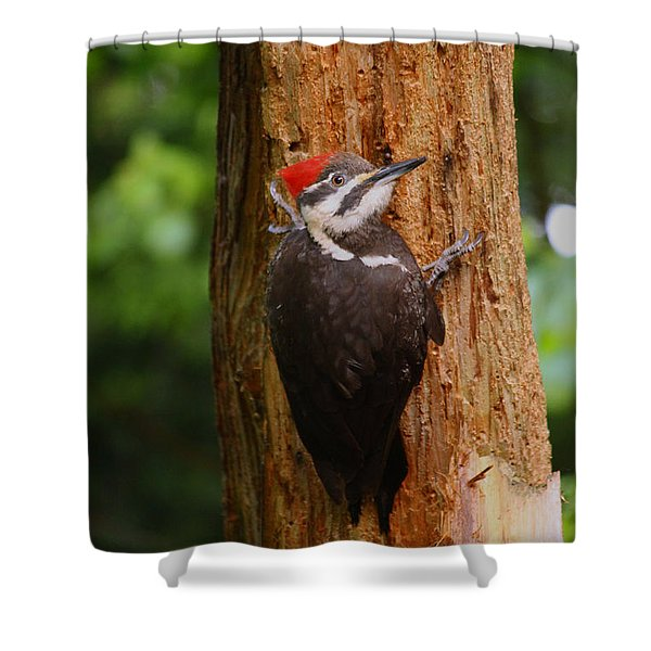 I Had To Give This Tree A Hug Shower Curtain by Kym Backland