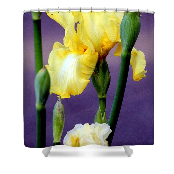 I Only Have Iris for You Shower Curtain by Kathy  White