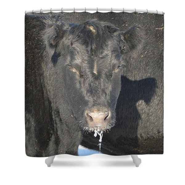 Iced Beef Shower Curtain by Bonfire Photography