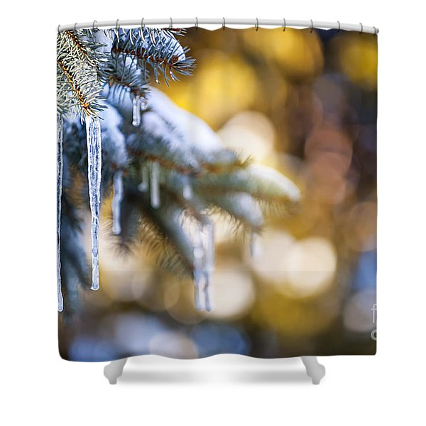 Icicles on fir tree in winter Shower Curtain by Elena Elisseeva